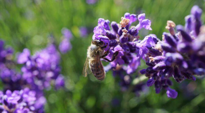 Artenvielfalt – Der Stand