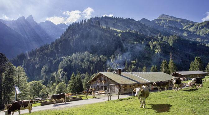 Buchrainer Alpe